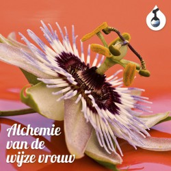Alchemy of the wise woman - MP3